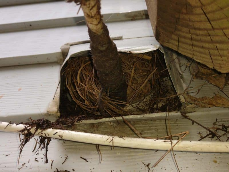 Picture of a dryer vent cleaning tool pulling a bird nest out of a dryer vent. This was from a dryer vent cleaning job in Montgomery Village, MD.