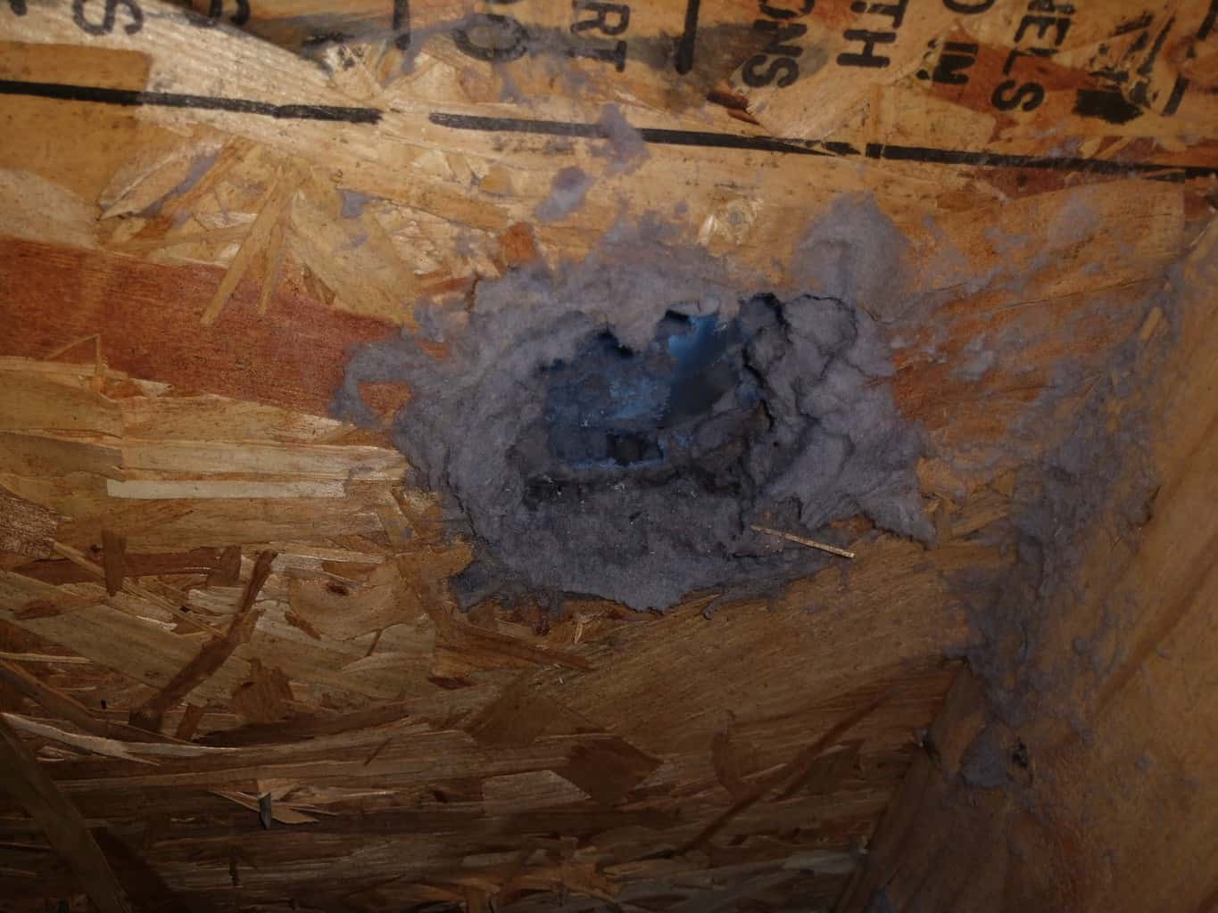 Picture of a clogged dryer vent roof penetration with a lover screened cover in Harper's Ferry, WV